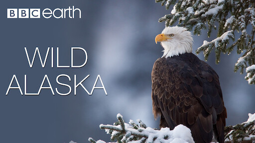 Wild Alaska | Netflix