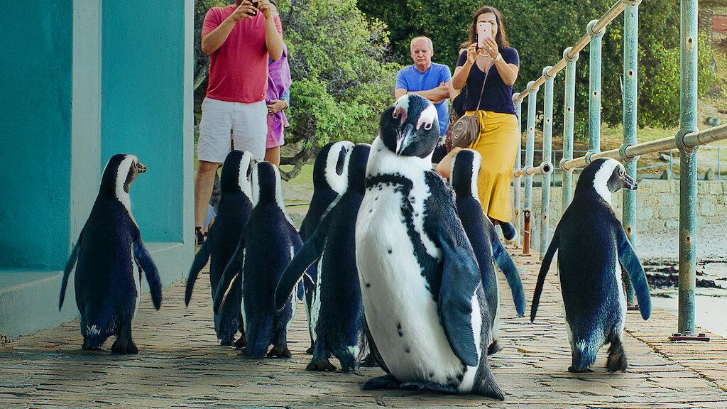 Penguin Town   Netflix Official Site